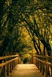 Calzada de madera a través del bosque Imágenes de archivo libres de regalías