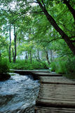 Calzada de madera a través del bosque Fotografía de archivo