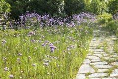 Calzada de piedra con las flores Imagen de archivo