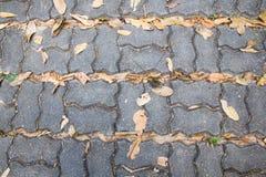 Calzada de piedra en el gardent imagen de archivo