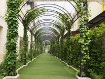 Calzada debajo de un túnel natural verde Fotografía de archivo