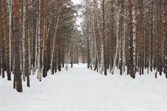 Calzada del invierno entre árboles Fotos de archivo