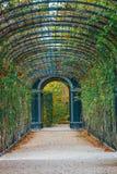 Calzada del jardín que forma un túnel verde de acacias en Viena Imagen de archivo libre de regalías