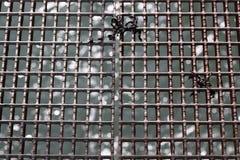 Calzada del metal sobre el mar Imagen de archivo libre de regalías