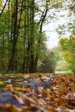 Calzada del otoño imágenes de archivo libres de regalías