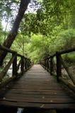 Calzada del puente de madera en el parque nacional Fotografía de archivo libre de regalías