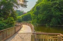 Calzada del puente en la costa, en el bosque imagen de archivo