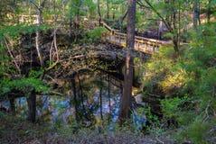 Calzada del rastro cerca de una primavera de la Florida Fotos de archivo libres de regalías