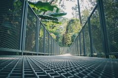 Calzada del toldo en el jardín botánico de la reina Sirikit Foto de archivo libre de regalías