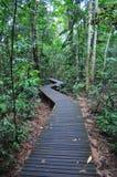 Calzada del zigzag en un área boscosa en un Peirce más inferior Fotos de archivo libres de regalías