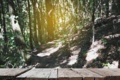 calzada en bosque en Kew Mae Pan Nature Trail y x28; Doi Inthanon Nati Imagen de archivo