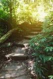 calzada en bosque en Kew Mae Pan Nature Trail y x28; Doi Inthanon Nati Fotografía de archivo libre de regalías