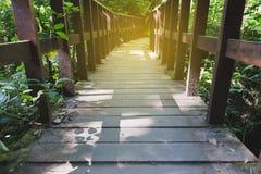 calzada en bosque en Kew Mae Pan Nature Trail y x28; Doi Inthanon Nati Imagenes de archivo