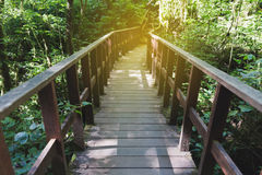 calzada en bosque en Kew Mae Pan Nature Trail y x28; Doi Inthanon Nati Fotos de archivo libres de regalías