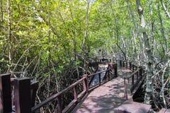 Calzada en el bosque del mangle en el parque de la nación de Pranburi, Tailandia Fotografía de archivo libre de regalías