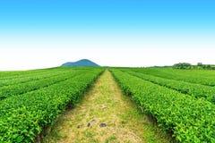 Calzada en granja del té imagen de archivo libre de regalías