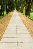 Calzada en las maderas de pino imagen de archivo