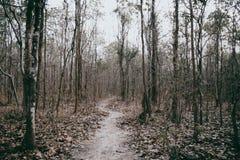 Calzada en oscuridad misteriosa del efecto del color del bosque Fotos de archivo