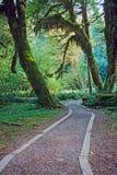 Calzada en parque nacional olímpico Fotografía de archivo