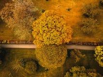 Calzada guardada por los árboles imagen de archivo libre de regalías