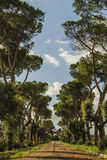 Calzada hermosa Imagen de archivo libre de regalías
