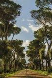 Calzada hermosa Imagenes de archivo