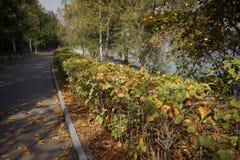 Calzada imponente del otoño Fotos de archivo