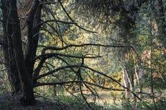 Calzada natural del bosque verde en luz del día soleado Foto de archivo