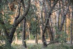 Calzada natural del bosque verde en luz del día soleado Fotos de archivo