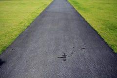 Calzada oscura en una hierba verde Imagen de archivo libre de regalías