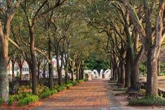SC de Charleston del toldo de árbol de la calzada peatonal Foto de archivo libre de regalías