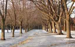 Calzada peatonal resbaladiza en invierno, Toronto, Ontario, Canadá Imágenes de archivo libres de regalías