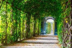 Calzada que forma un túnel verde Imagenes de archivo