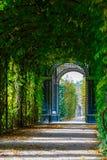 Calzada que forma un túnel verde de acacias Foto de archivo libre de regalías