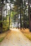 Calzada soñadora en bosque Fotografía de archivo libre de regalías