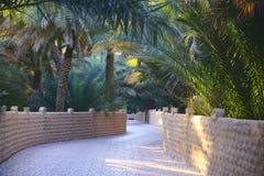 Calzada a través de Al Ain Oasis foto de archivo