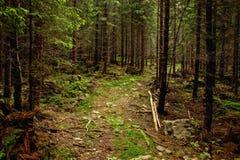Calzada a través del bosque Imágenes de archivo libres de regalías