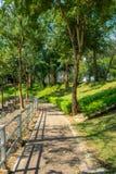 Calzada vacía con los carriles de madera y árboles enormes con luz del sol en parque fotografía de archivo