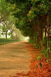 Calzada verde al lado de la autopista Fotos de archivo
