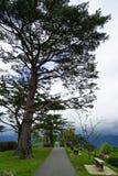 Calzada y bancos en jardín japonés en la cima de la montaña con el pino Fotografía de archivo libre de regalías