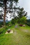Calzada y bancos entre árboles verdes e hierba en japonés Gard Fotos de archivo