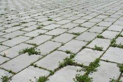 Calzada y malas hierbas Foto de archivo libre de regalías
