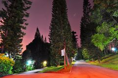Calzadas de divergencia rodeadas por los árboles altos Fotografía de archivo libre de regalías