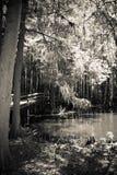 Calzadas de madera en el lago y Iris Gardens swan Foto de archivo