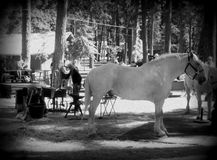 Calzar a viejo Gray Horse en la obra clásica del caballo de proyecto Fotos de archivo libres de regalías