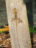 Caméléon sur un tronc d'arbre photographie stock libre de droits