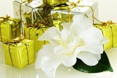 Camélia agradável fresca com folha e poucas caixas de presente Fotografia de Stock Royalty Free