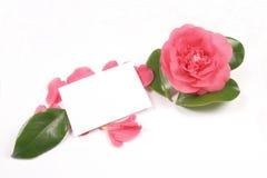 Camélia e cartão imagens de stock royalty free
