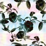 Camélia - fleurs, bourgeons et feuilles - sur un fond d'aquarelle Collage des fleurs, des feuilles et des bourgeons sur un fond d illustration stock