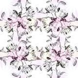 Camélia - flores, botões e folhas - em um fundo da aquarela Imagens de Stock Royalty Free
